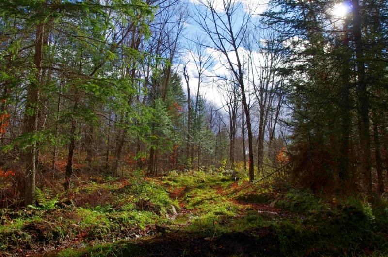 Woods georgewm